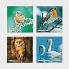 Gedächtnisspiel Vogelarten