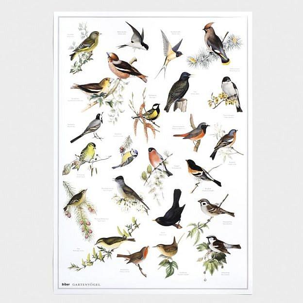 Poster Gartenvögel, Kunstdruck